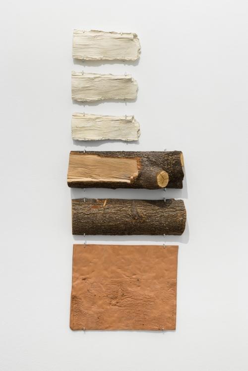 gabriela albergaria tronco de arvore derrubada pelo furacao sandy 2012 2014